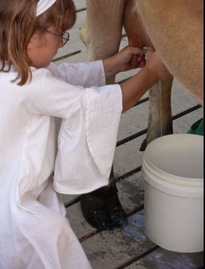 woman milking a cow by pulling on the teat