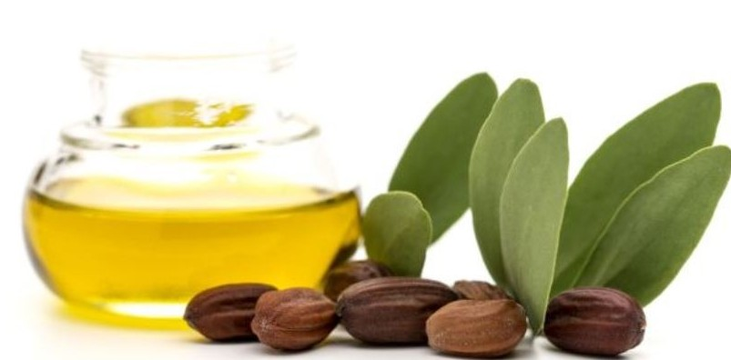 how to use jojoba oil for skin and hair jojoba oil and seeds