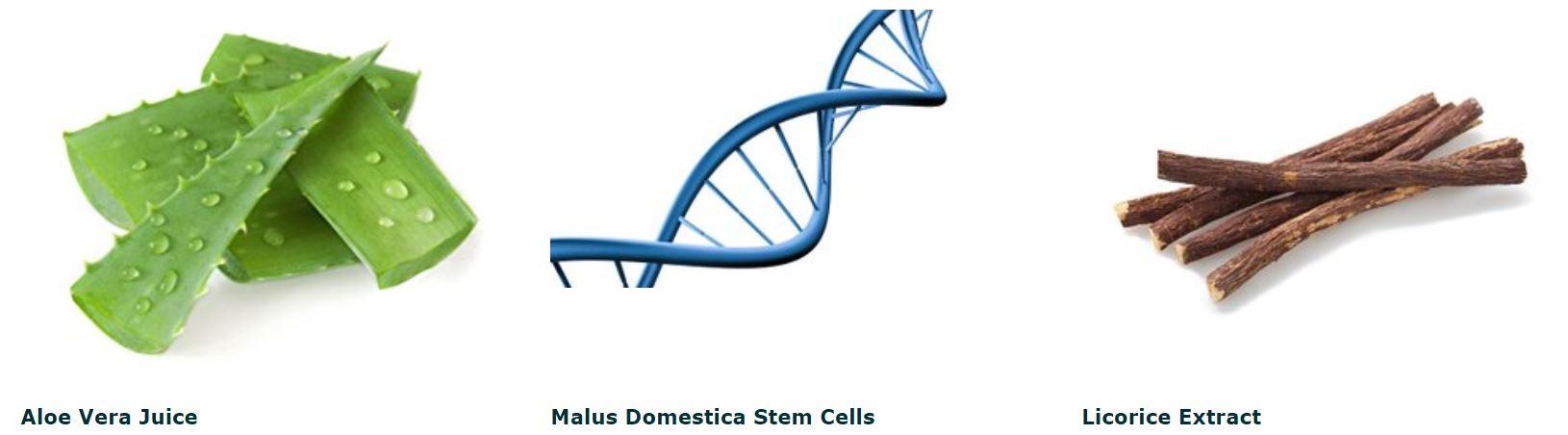 aloe vera stem cells licorice extract images